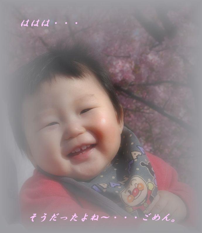 三浦の桜小松池 296