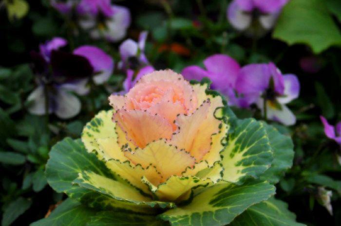 三浦の桜小松池 102