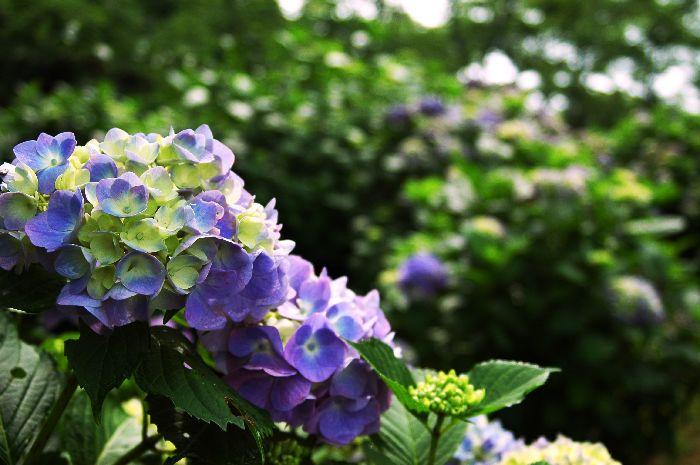 紫雲出・上新田 054