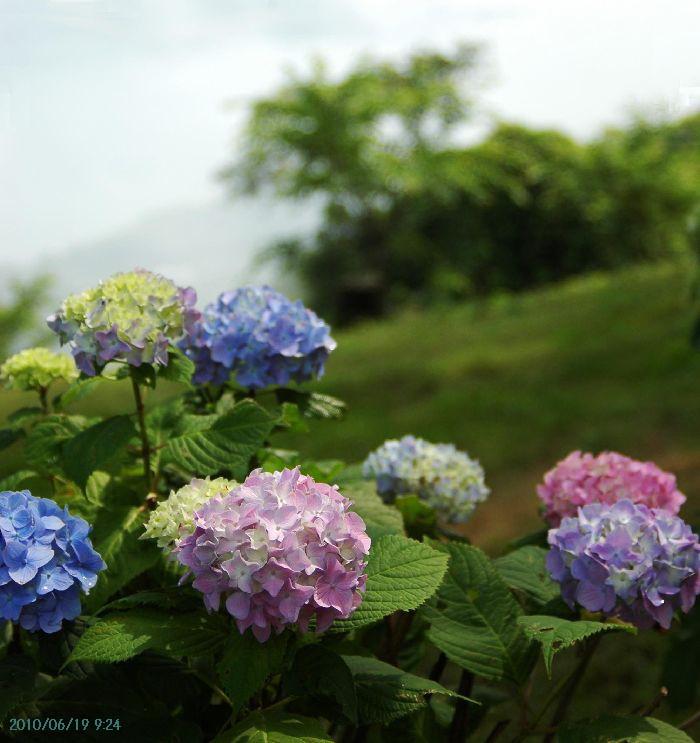 コピー ~ 紫雲出・上新田 057