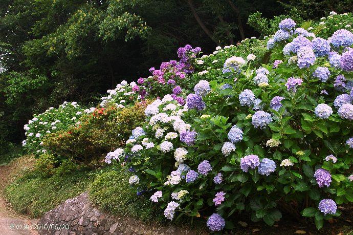 紫雲出・上新田 151