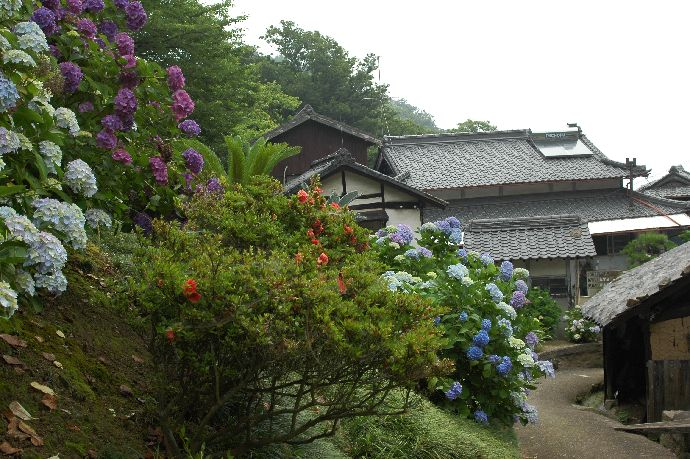 紫雲出・上新田 170
