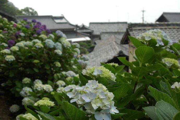 紫雲出・上新田 155