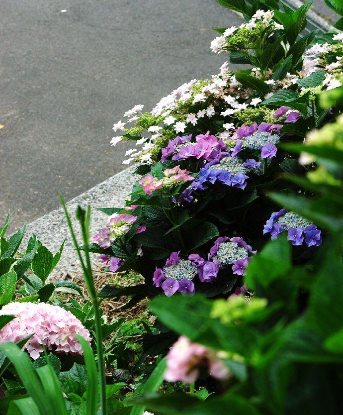 紫雲出・上新田 193