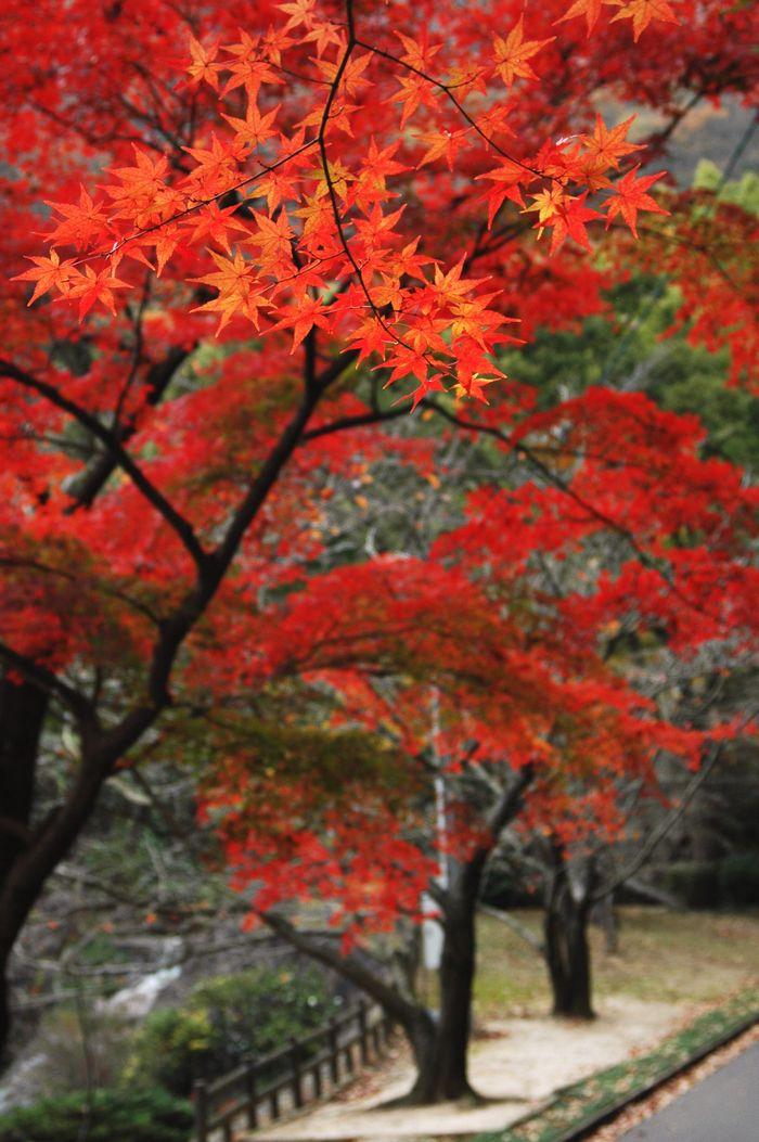 本山寺界隈 097