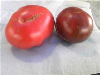 トマト色の違い
