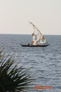 トルカナ湖 帆船