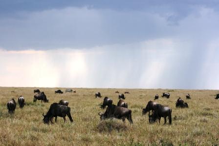マサイ マラ 草原