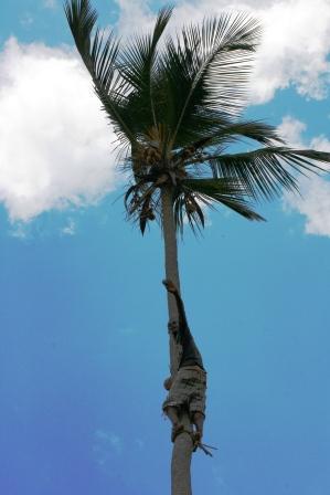 ザンジバル 椰子の木