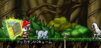 Maple8003a.jpg