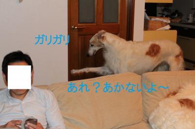 neru2_convert_20110601223446.jpg