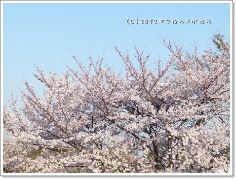 okujohanami21.jpg