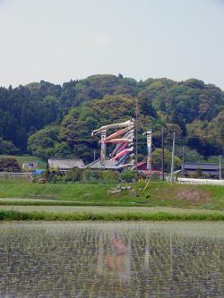 鯉のぼり3_convert_20100505212518