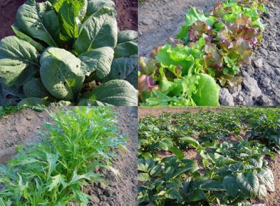 野菜4_convert_20100509231021