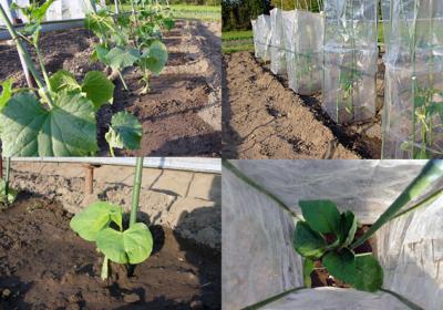 野菜苗_convert_20100509231044