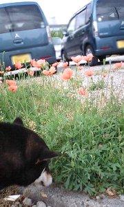 110514_flower.jpg