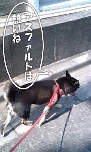 110818_atsui2.jpg