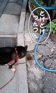 110920_tawashi.jpg