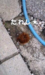 110920_tawashi2.jpg