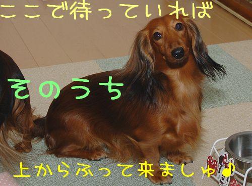 imo_11.jpg