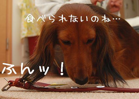 kubiwa_12.jpg
