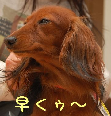 kubiwa_7.jpg