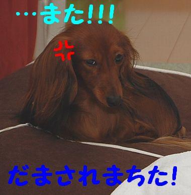 zabuton_7.jpg
