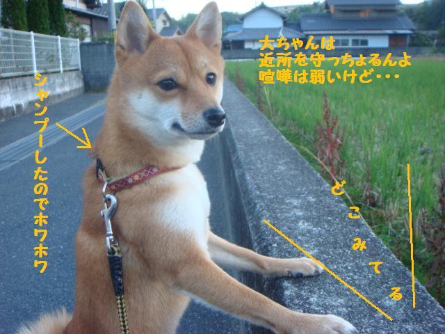 大ちゃん散歩2