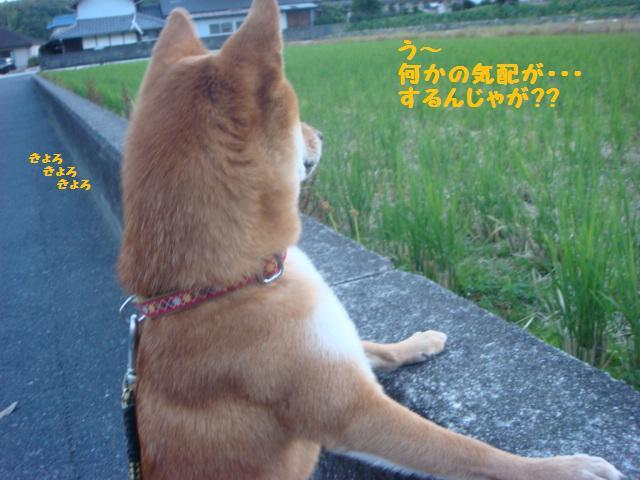 大ちゃん散歩3