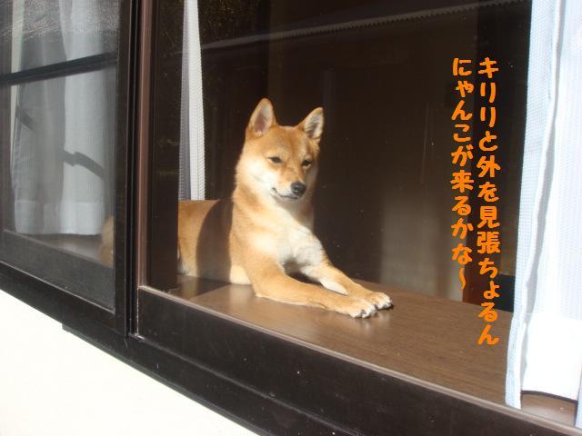 出窓にて3