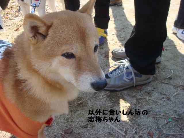 OW 恋梅ちゃん