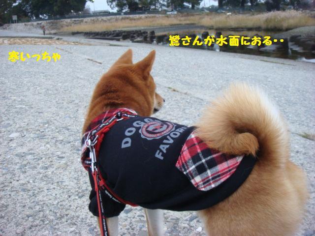 大ちゃんの散歩4