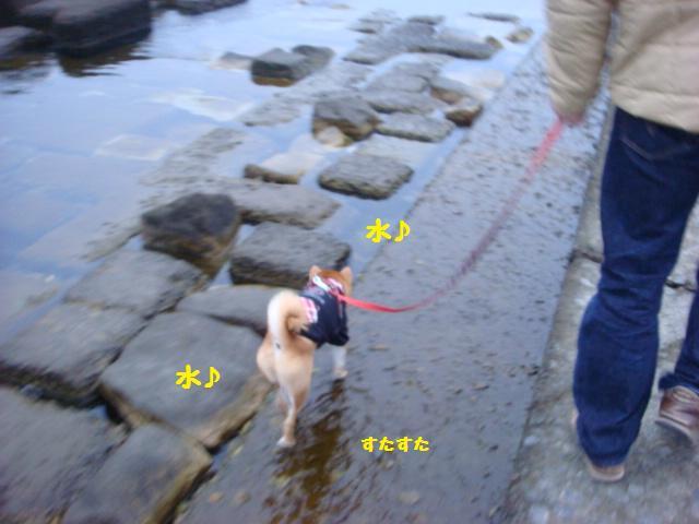 大ちゃんの散歩3