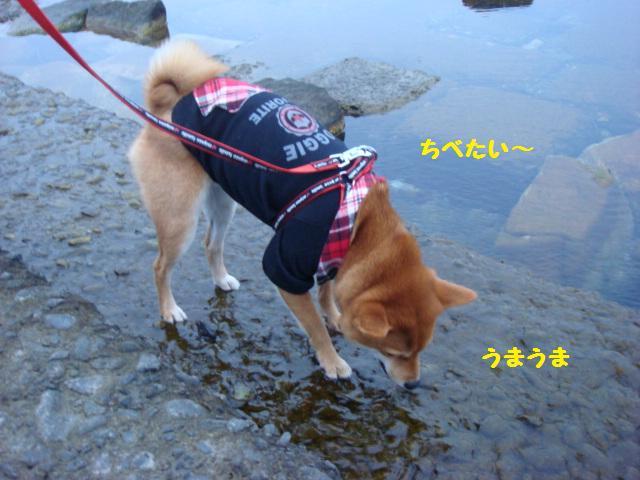 大ちゃんの散歩2