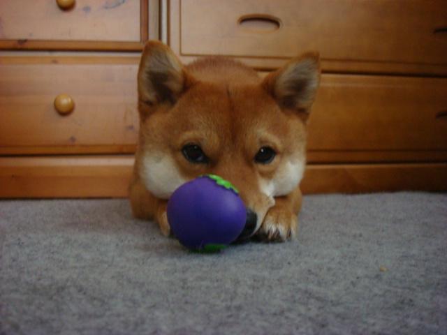 ボールと一緒
