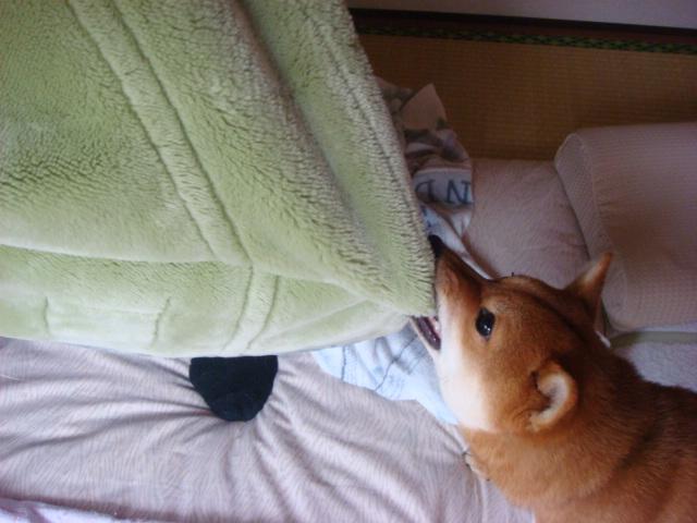 毛布かみかみ