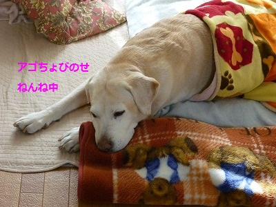 1_20100110135745.jpg