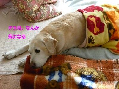2_20100110135745.jpg