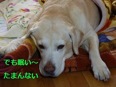 3_20100111171624.jpg