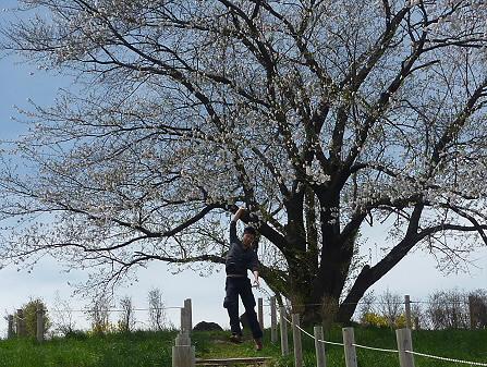ジャンプ!為内の一本桜01(2011.5.10)