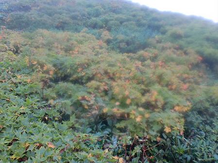 三ツ石山10(2011.9.21)佐々木さん
