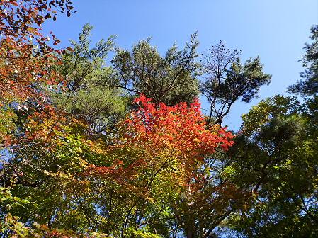 岩手山焼走り熔岩流の紅葉09(2011.10.11)