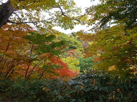 樹海ラインの紅葉17(2011.10.11)