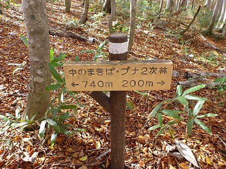 安比高原ブナ二次林11(2011.10.18)