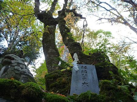 不動の滝07(2011.10.18)