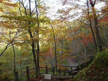 不動の滝15(2011.10.18)