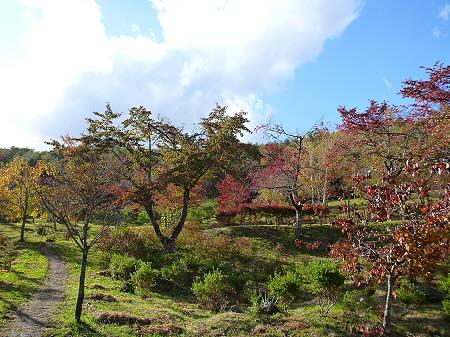不動の滝18(2011.10.18)