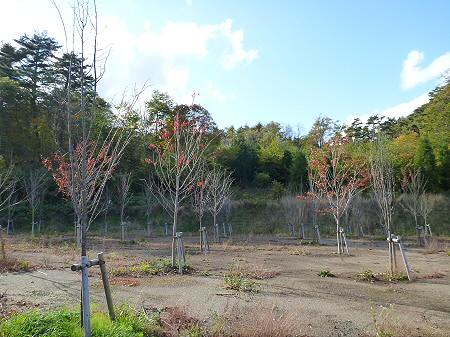 林道を行く09(2011.10.18)
