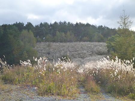 林道を行く27(2011.10.18)