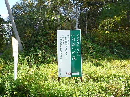 不動の滝19(2011.10.18)